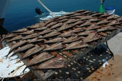 2006-08-03-Grecia-0745-Pàros-Naoussa