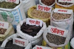 2011-03-21-India-164-Haridwar