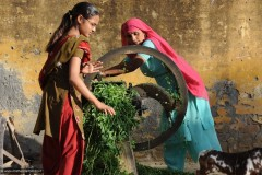 2011-03-22-India-388-Gahera