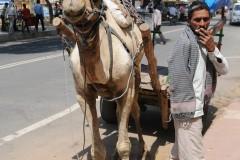 2011-03-23-India-360-Fatehpur-Sikri